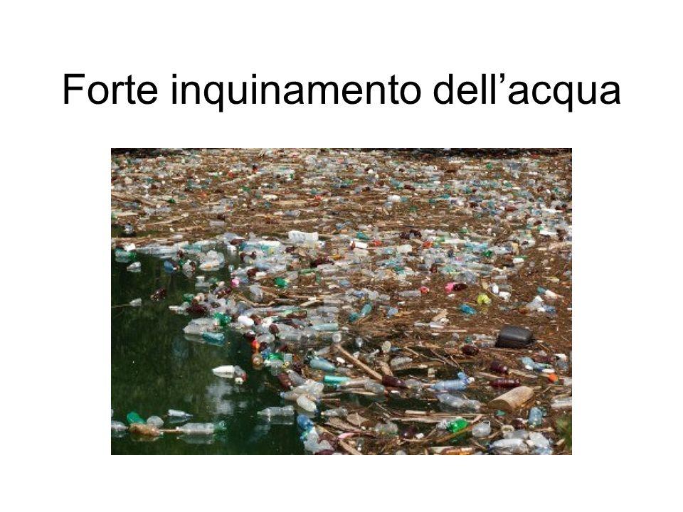Forte inquinamento dell'acqua