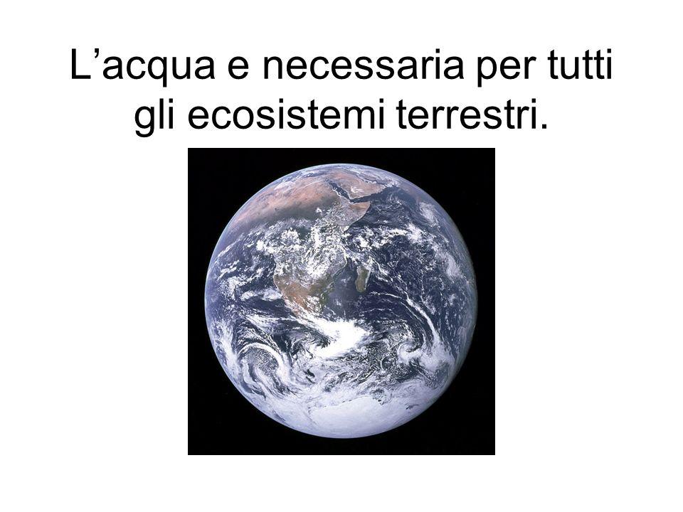 L'acqua e necessaria per tutti gli ecosistemi terrestri.