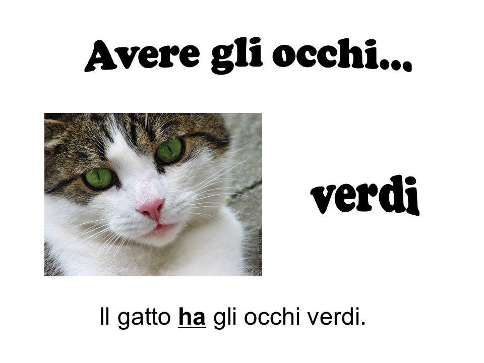 Il gatto ha gli occhi verdi.
