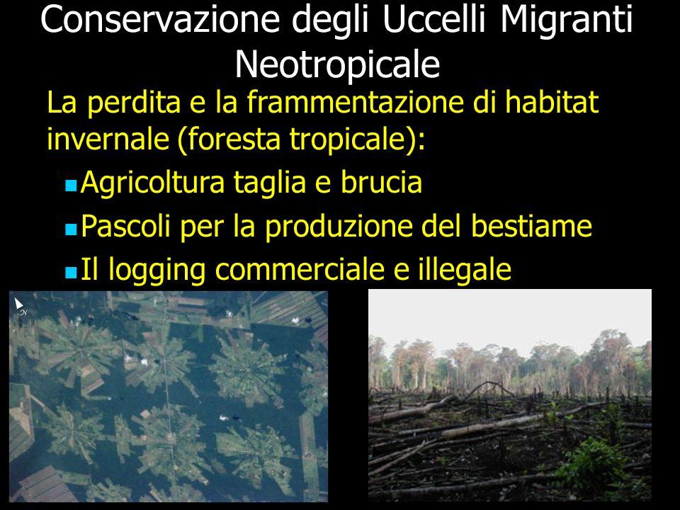 Conservazione degli Uccelli Migranti Neotropicale