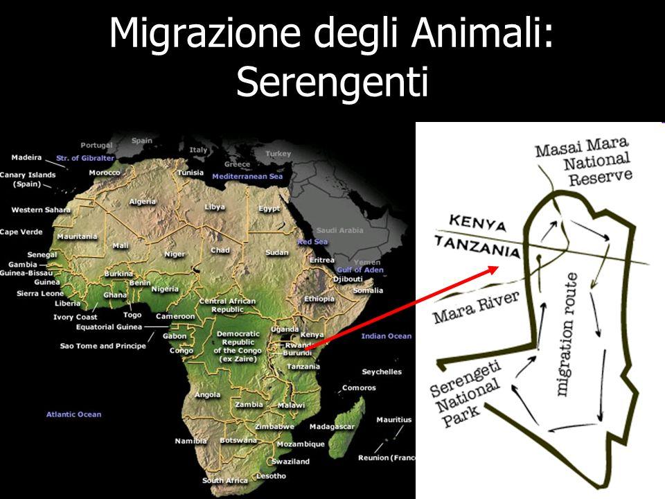 Migrazione degli Animali: Serengenti