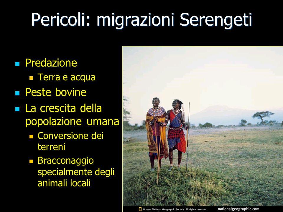 Pericoli: migrazioni Serengeti