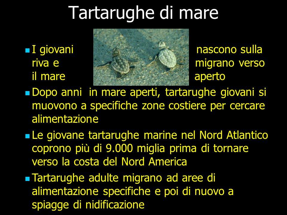 Tartarughe di mare