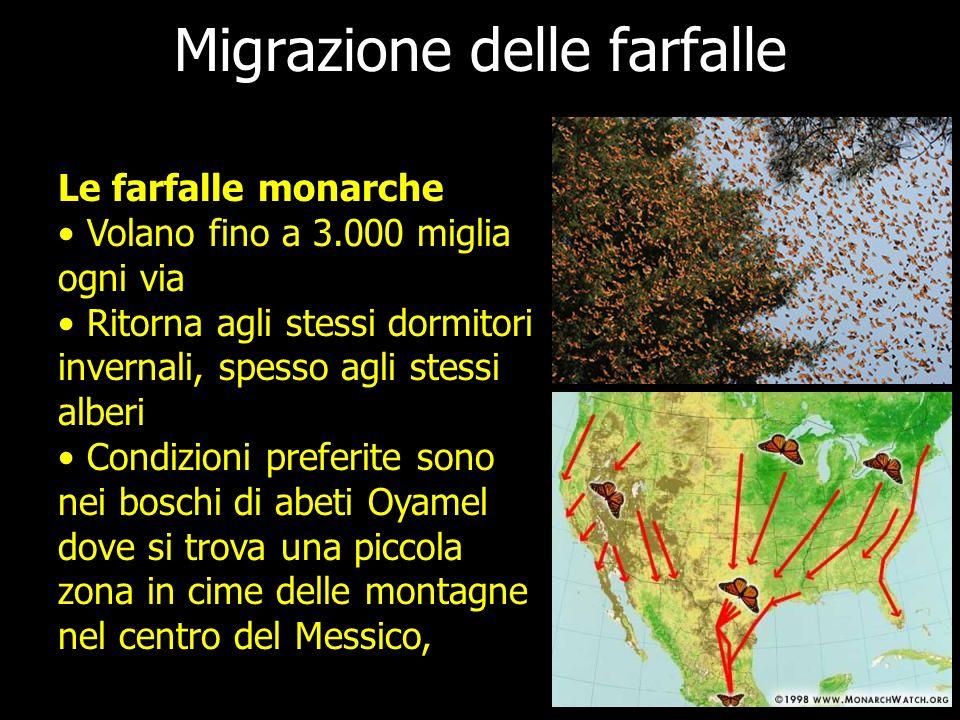 Migrazione delle farfalle