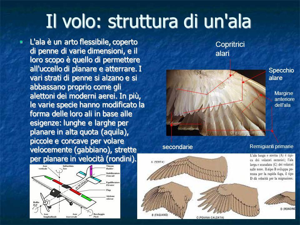 Il volo: struttura di un ala