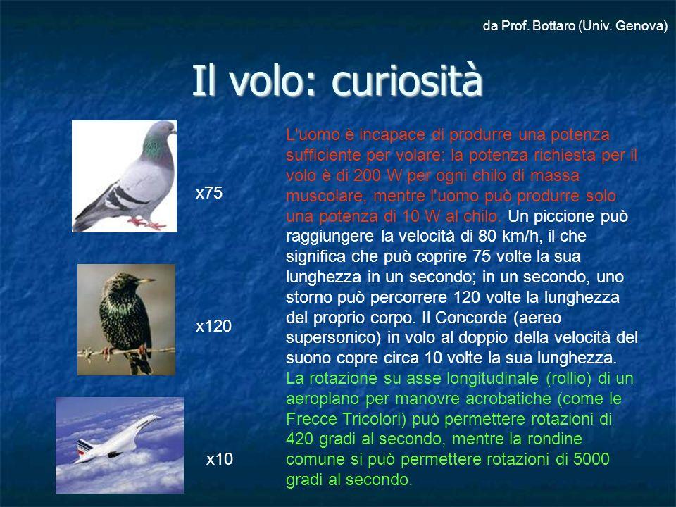 Dalla struttura al volo ppt video online scaricare - Si puo portare l ombrello in aereo ...