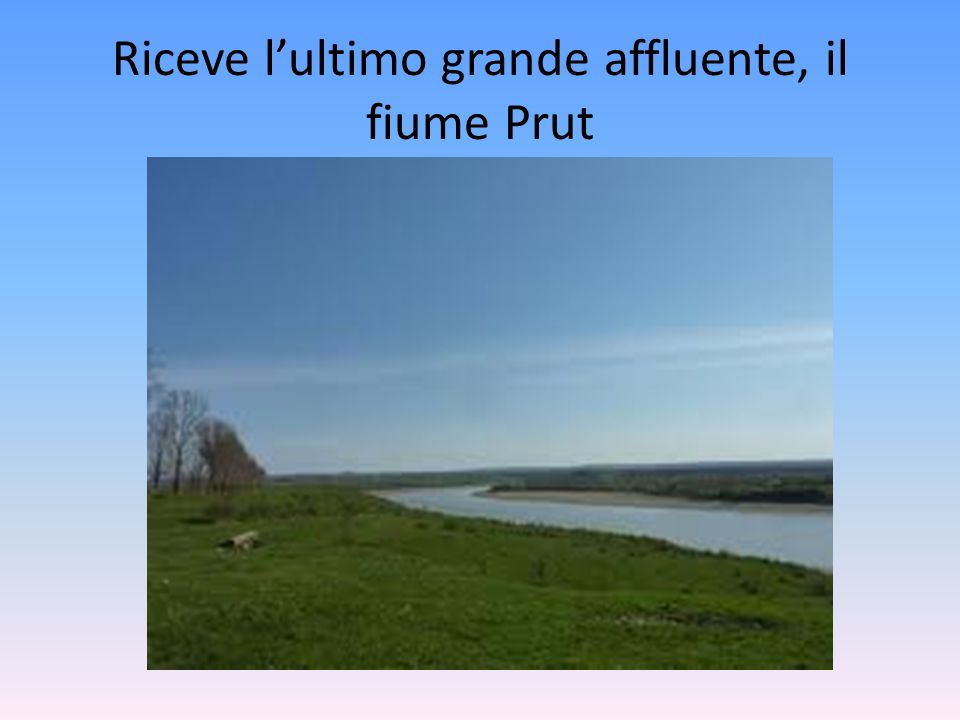 Riceve l'ultimo grande affluente, il fiume Prut