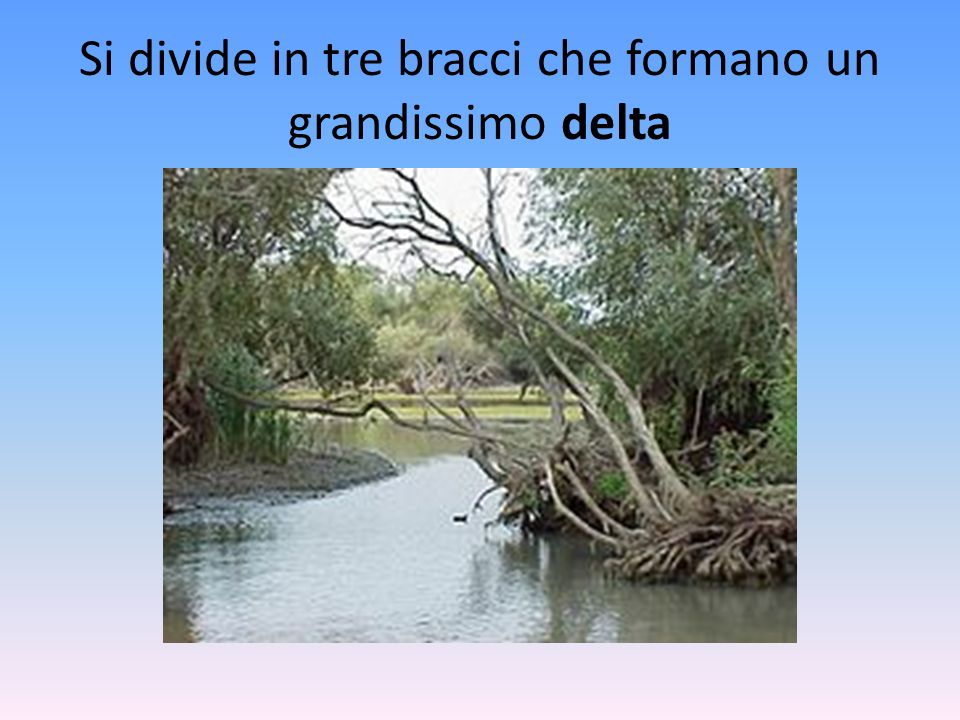 Si divide in tre bracci che formano un grandissimo delta