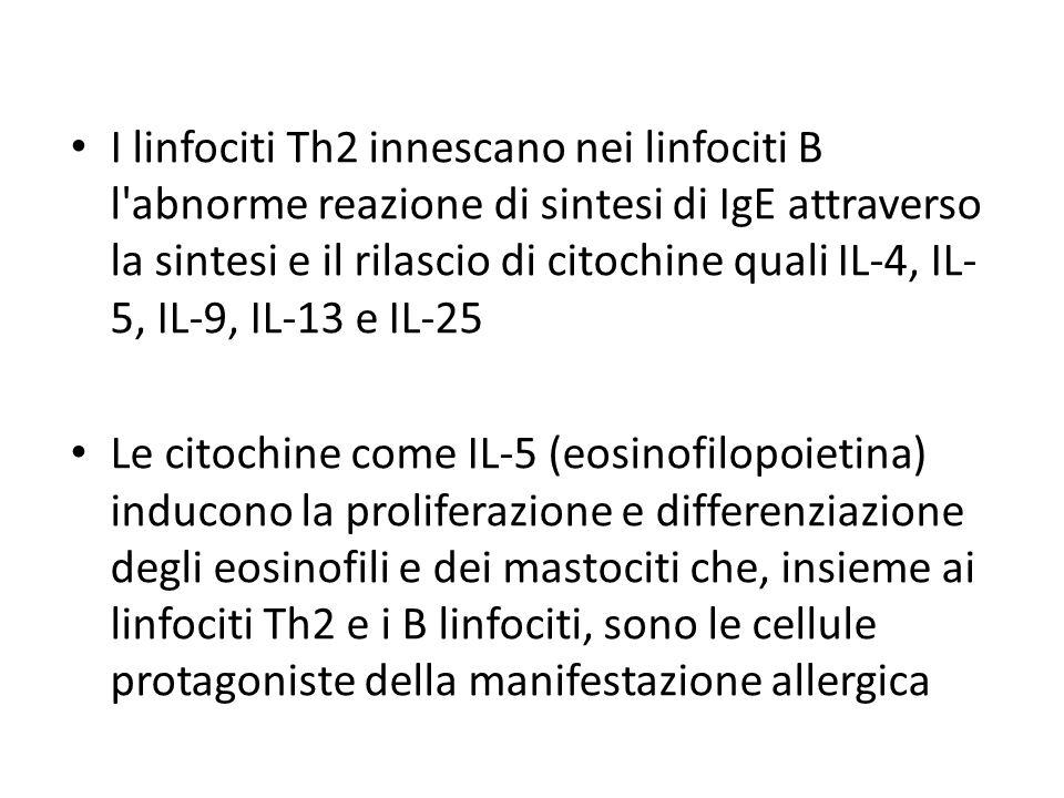 I linfociti Th2 innescano nei linfociti B l abnorme reazione di sintesi di IgE attraverso la sintesi e il rilascio di citochine quali IL-4, IL-5, IL-9, IL-13 e IL-25