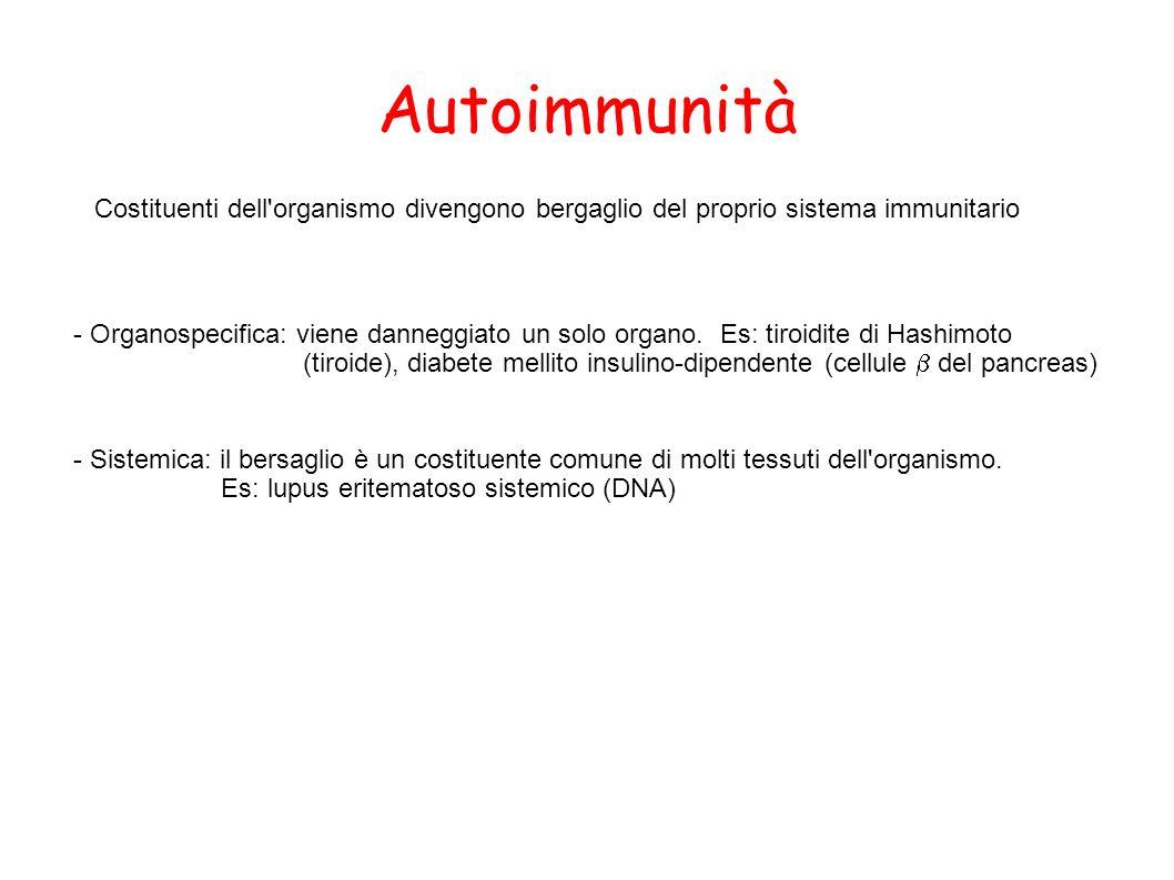 Autoimmunità Costituenti dell organismo divengono bergaglio del proprio sistema immunitario.
