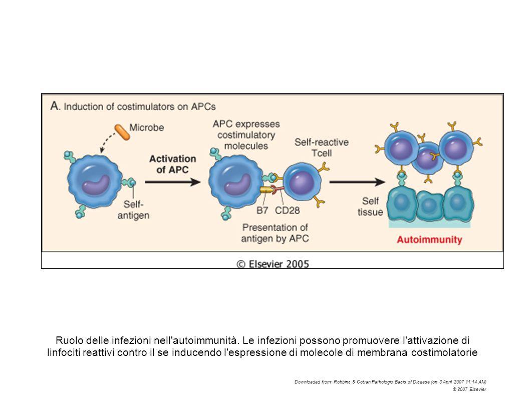 Ruolo delle infezioni nell autoimmunità