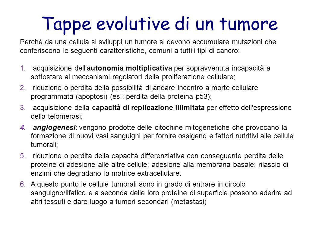Tappe evolutive di un tumore