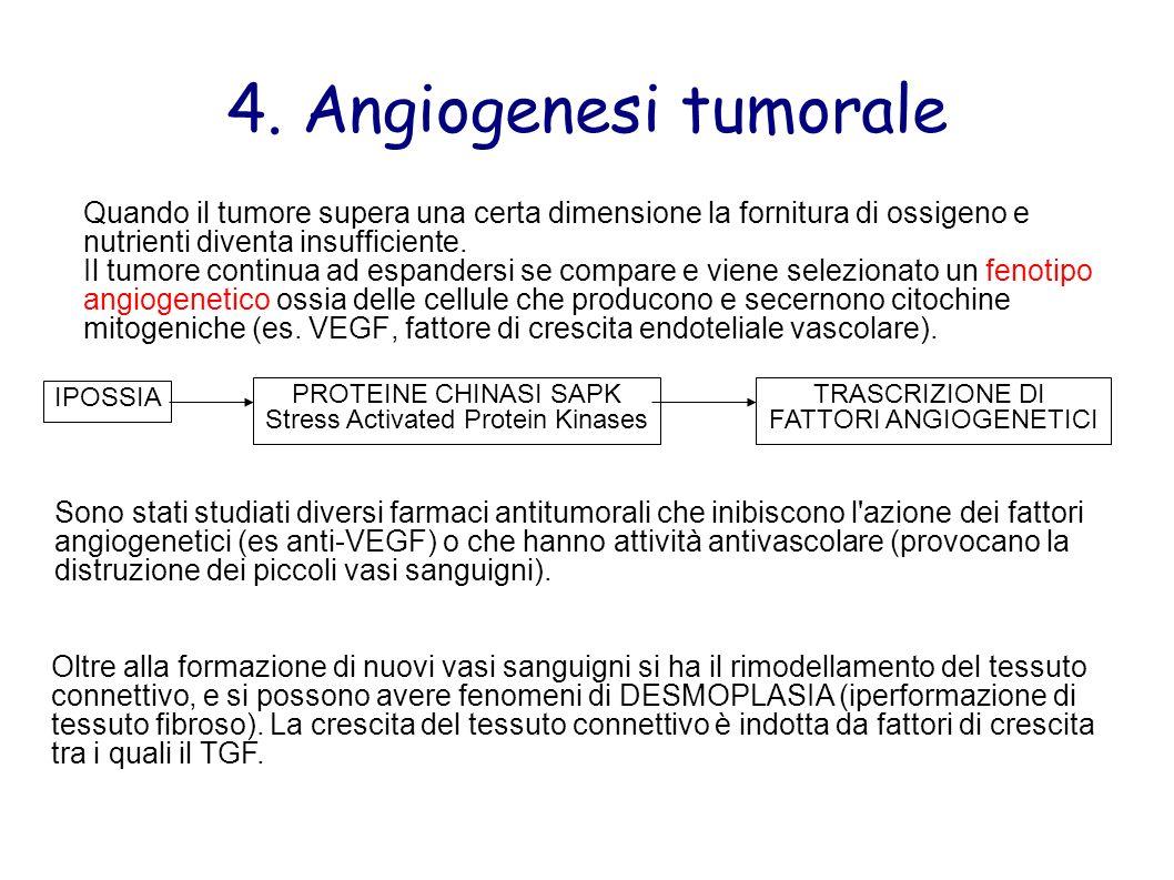 4. Angiogenesi tumorale Quando il tumore supera una certa dimensione la fornitura di ossigeno e nutrienti diventa insufficiente.