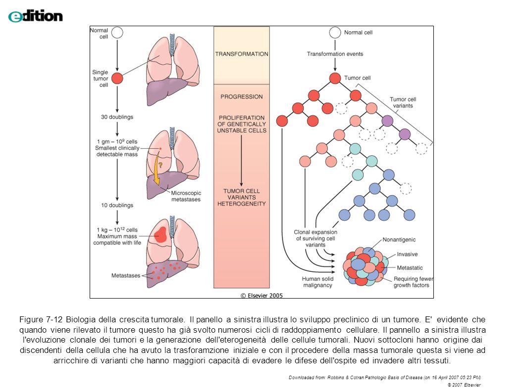 Figure 7-12 Biologia della crescita tumorale