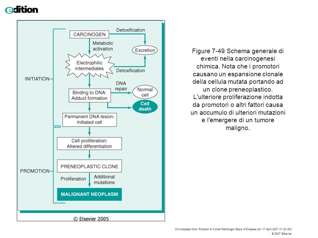 Figure 7-49 Schema generale di eventi nella carcinogenesi chimica
