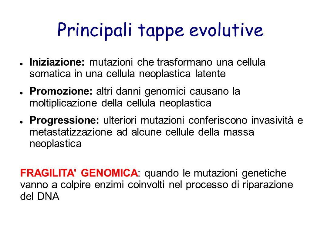 Principali tappe evolutive