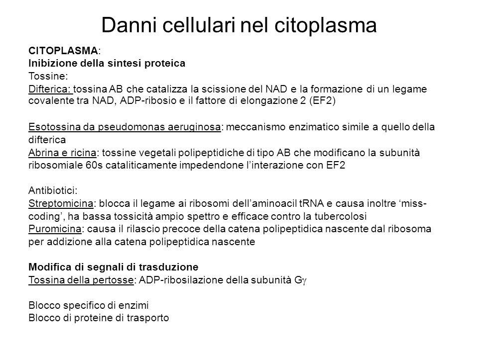 Danni cellulari nel citoplasma