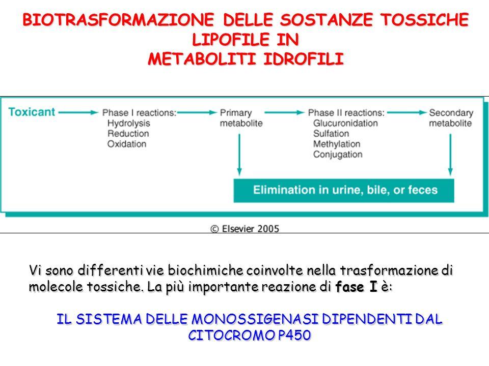 BIOTRASFORMAZIONE DELLE SOSTANZE TOSSICHE LIPOFILE IN