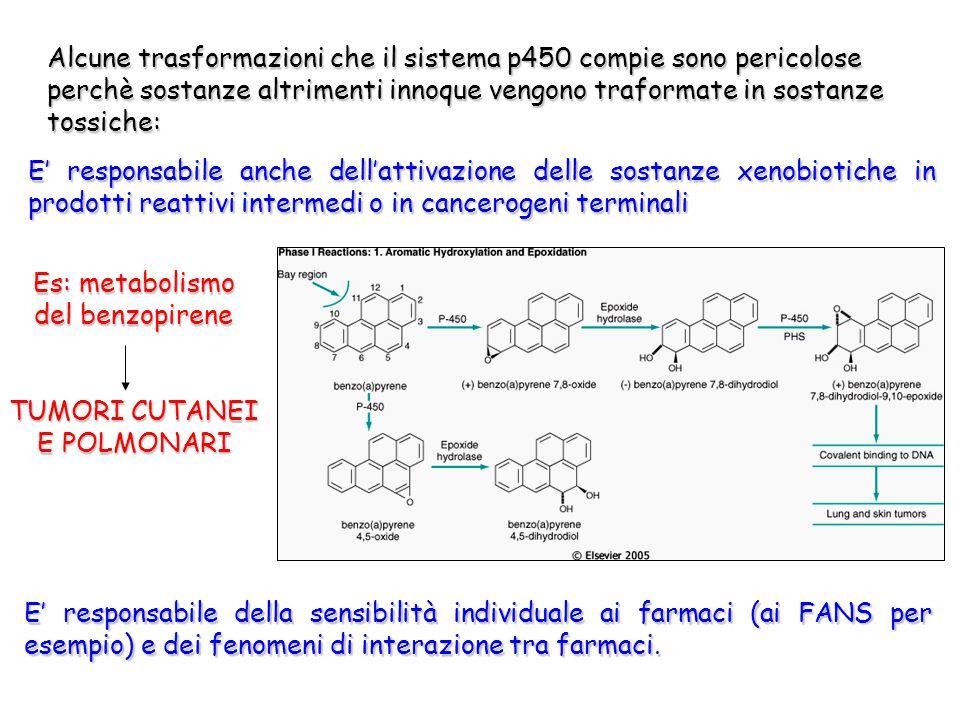 Alcune trasformazioni che il sistema p450 compie sono pericolose perchè sostanze altrimenti innoque vengono traformate in sostanze tossiche:
