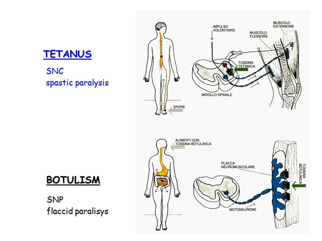 TETANUS BOTULISM SNC spastic paralysis SNP flaccid paralisys
