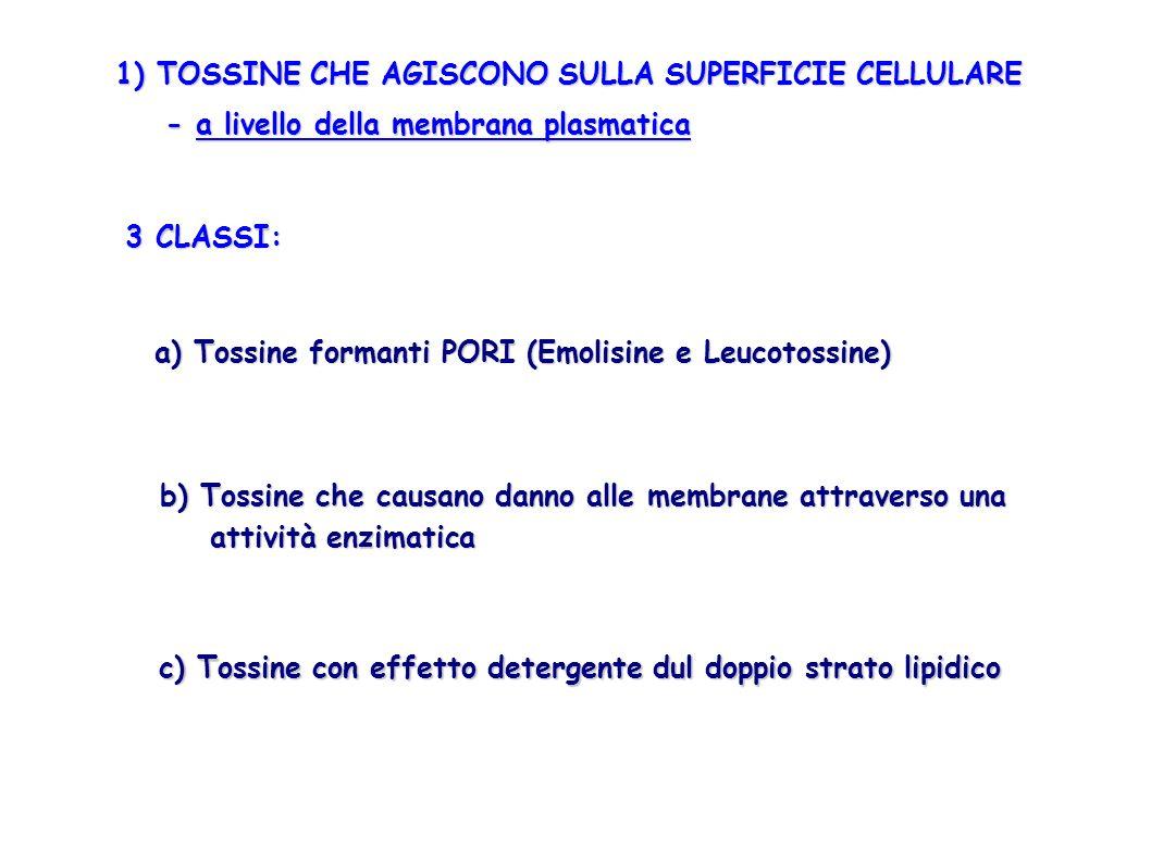 1) TOSSINE CHE AGISCONO SULLA SUPERFICIE CELLULARE