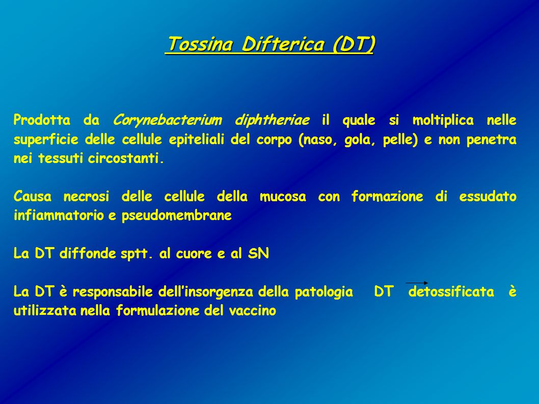 Tossina Difterica (DT)‏