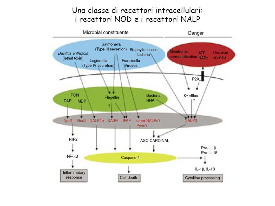 Una classe di recettori intracellulari: