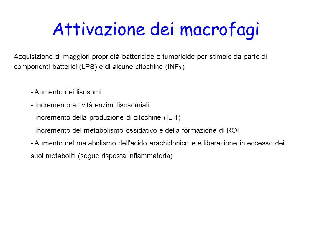 Attivazione dei macrofagi