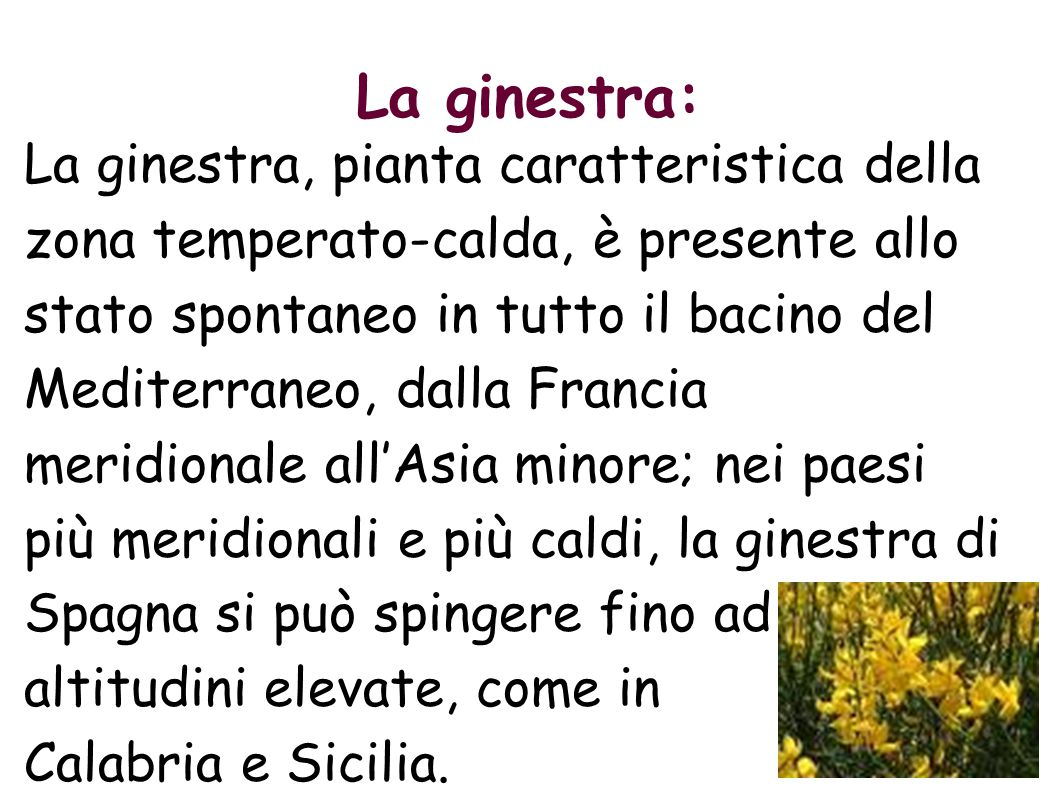 La ginestra: