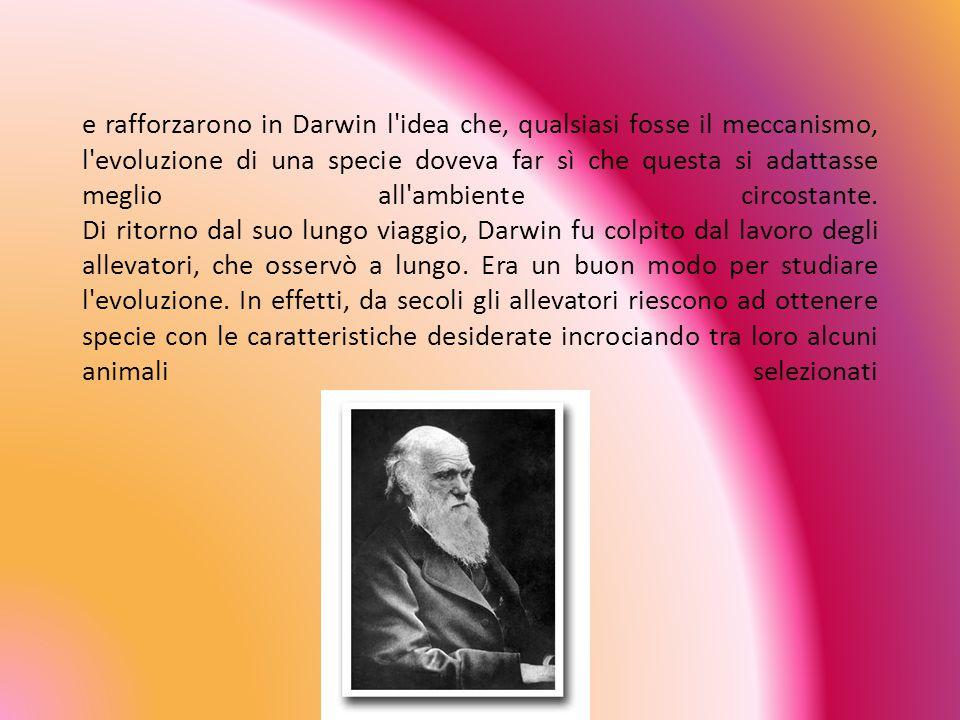 e rafforzarono in Darwin l idea che, qualsiasi fosse il meccanismo, l evoluzione di una specie doveva far sì che questa si adattasse meglio all ambiente circostante.