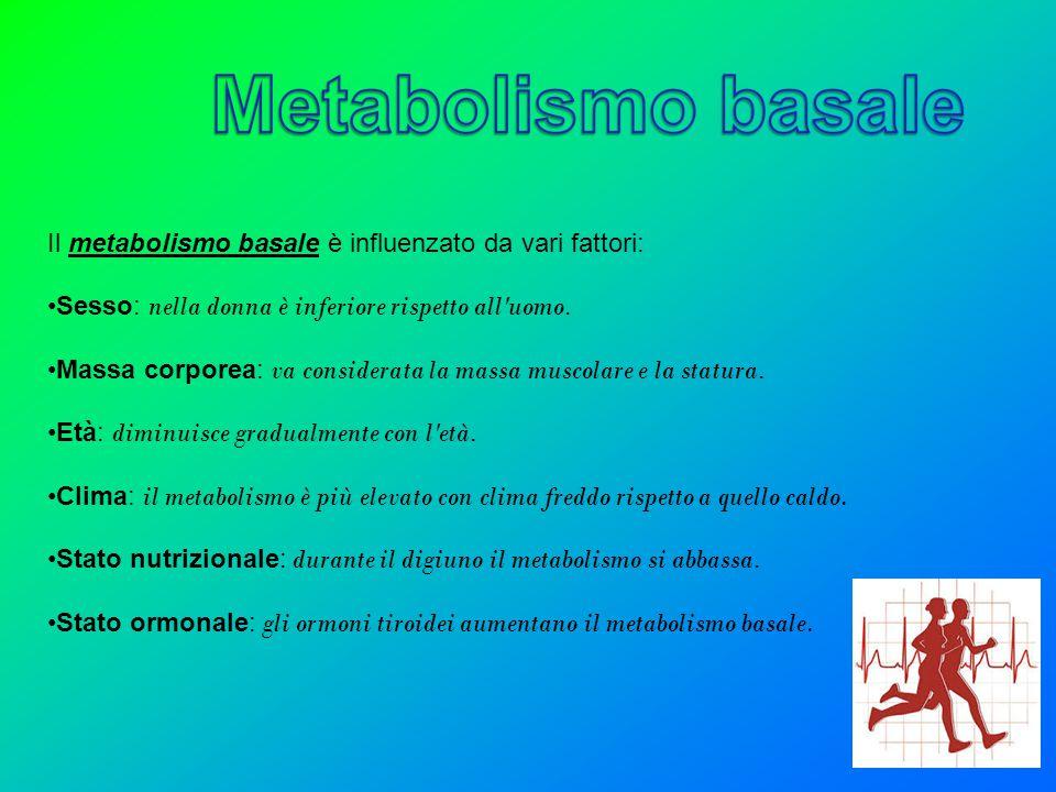 Il metabolismo basale è influenzato da vari fattori: