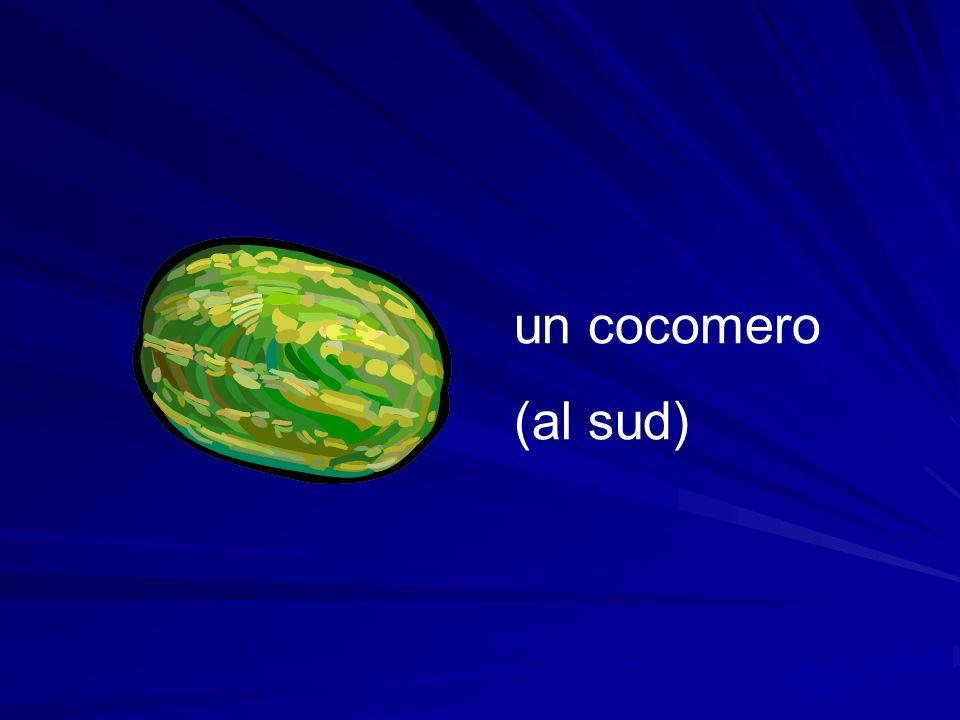 un cocomero (al sud)