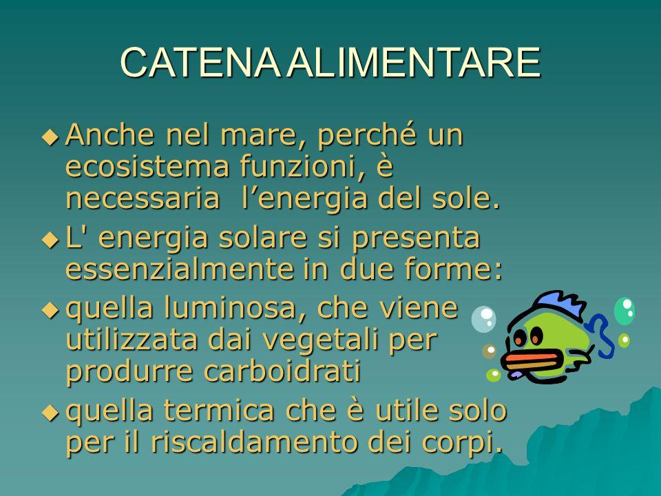 CATENA ALIMENTARE Anche nel mare, perché un ecosistema funzioni, è necessaria l'energia del sole.