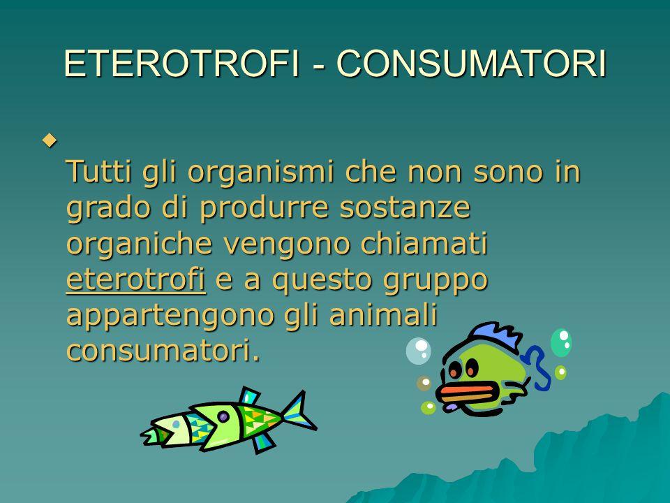 ETEROTROFI - CONSUMATORI