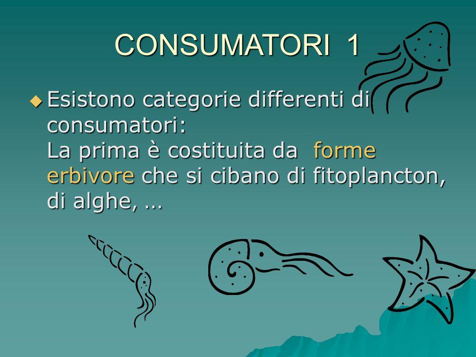 CONSUMATORI 1 Esistono categorie differenti di consumatori: La prima è costituita da forme erbivore che si cibano di fitoplancton, di alghe, ...