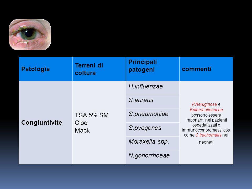 Patologia Terreni di coltura Principali patogeni commenti