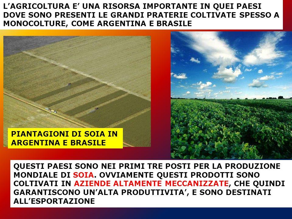 L'AGRICOLTURA E' UNA RISORSA IMPORTANTE IN QUEI PAESI DOVE SONO PRESENTI LE GRANDI PRATERIE COLTIVATE SPESSO A MONOCOLTURE, COME ARGENTINA E BRASILE