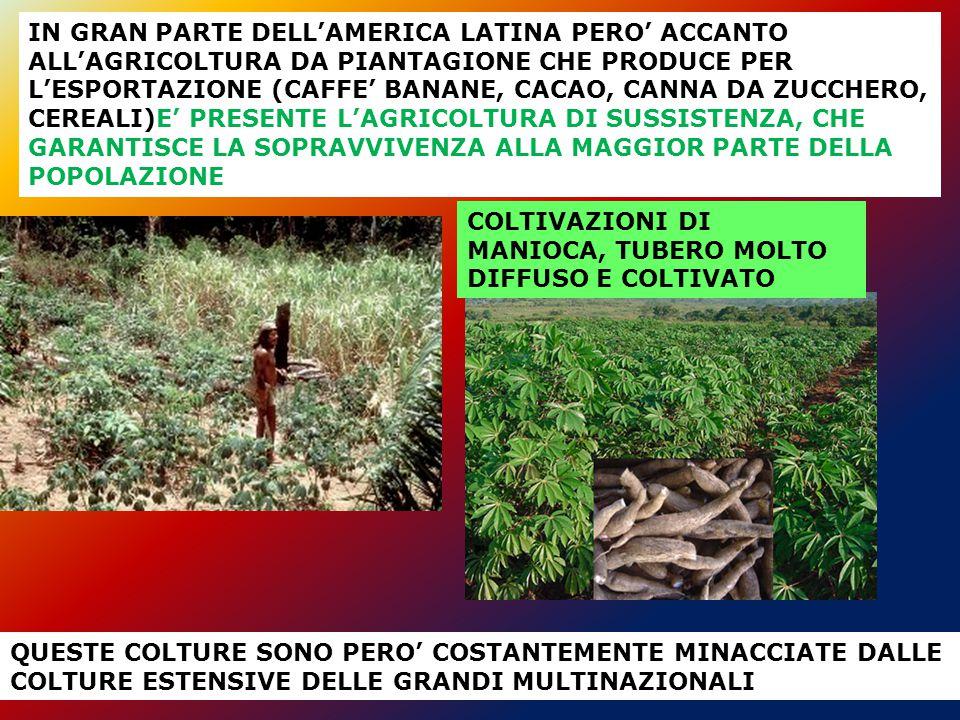 IN GRAN PARTE DELL'AMERICA LATINA PERO' ACCANTO ALL'AGRICOLTURA DA PIANTAGIONE CHE PRODUCE PER L'ESPORTAZIONE (CAFFE' BANANE, CACAO, CANNA DA ZUCCHERO, CEREALI)E' PRESENTE L'AGRICOLTURA DI SUSSISTENZA, CHE GARANTISCE LA SOPRAVVIVENZA ALLA MAGGIOR PARTE DELLA POPOLAZIONE
