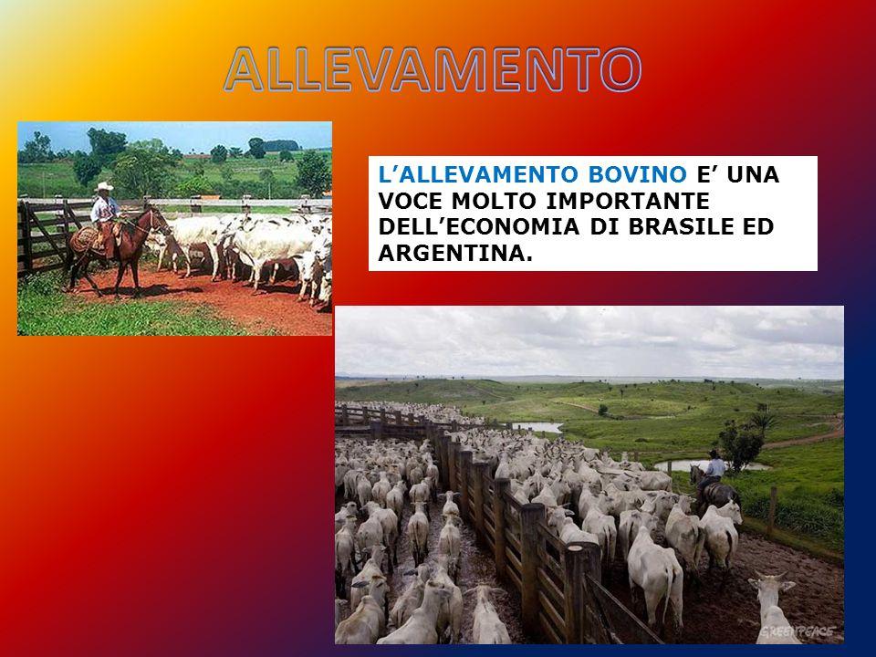 ALLEVAMENTO L'ALLEVAMENTO BOVINO E' UNA VOCE MOLTO IMPORTANTE DELL'ECONOMIA DI BRASILE ED ARGENTINA.
