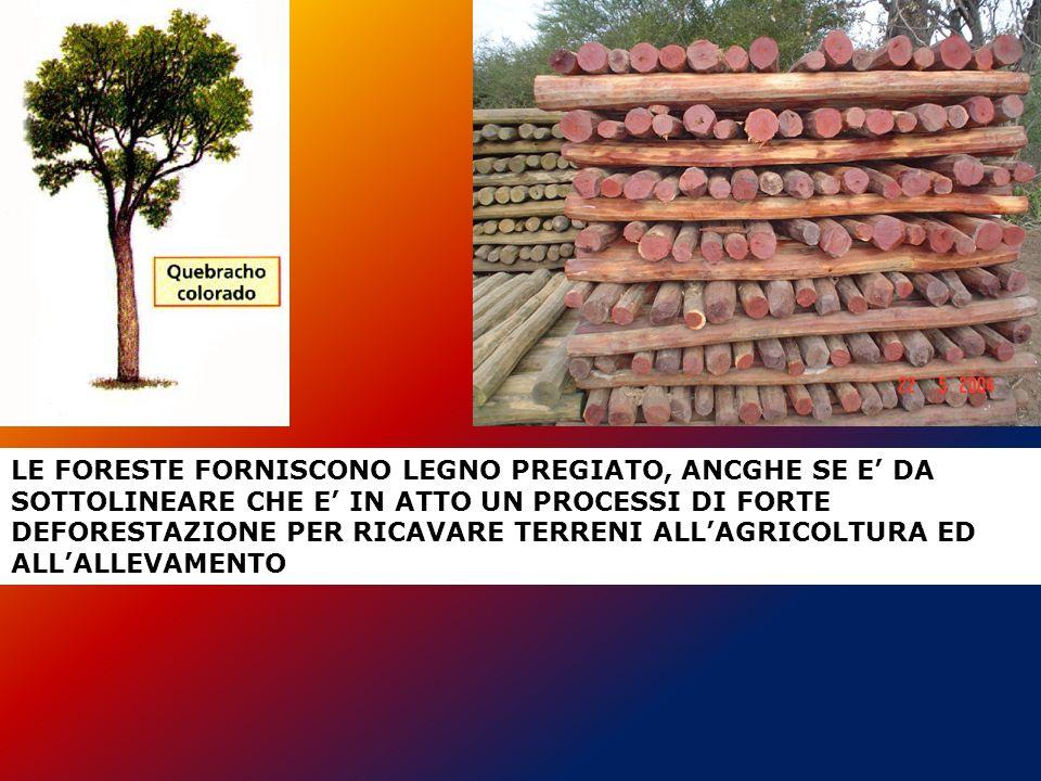 LE FORESTE FORNISCONO LEGNO PREGIATO, ANCGHE SE E' DA SOTTOLINEARE CHE E' IN ATTO UN PROCESSI DI FORTE DEFORESTAZIONE PER RICAVARE TERRENI ALL'AGRICOLTURA ED ALL'ALLEVAMENTO