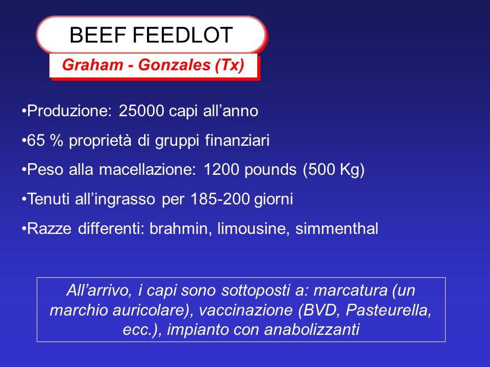 BEEF FEEDLOT Graham - Gonzales (Tx) Produzione: 25000 capi all'anno