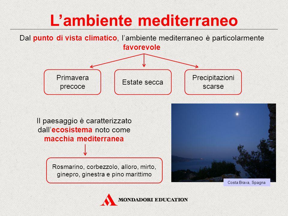 L'ambiente mediterraneo