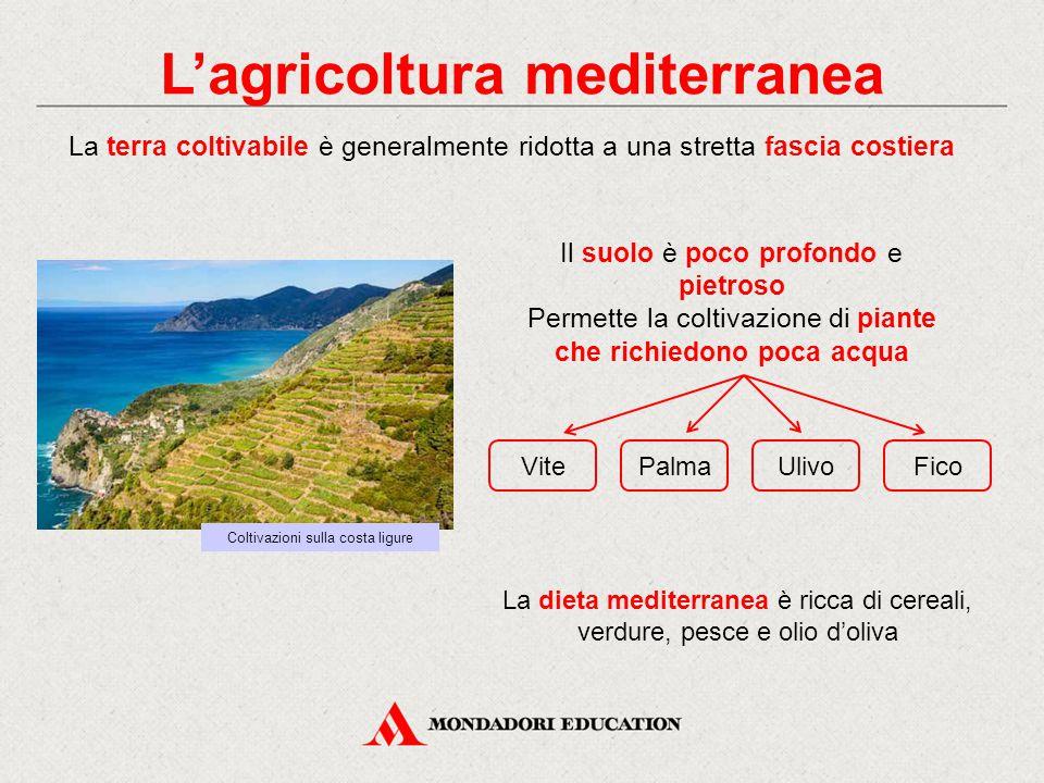 L'agricoltura mediterranea