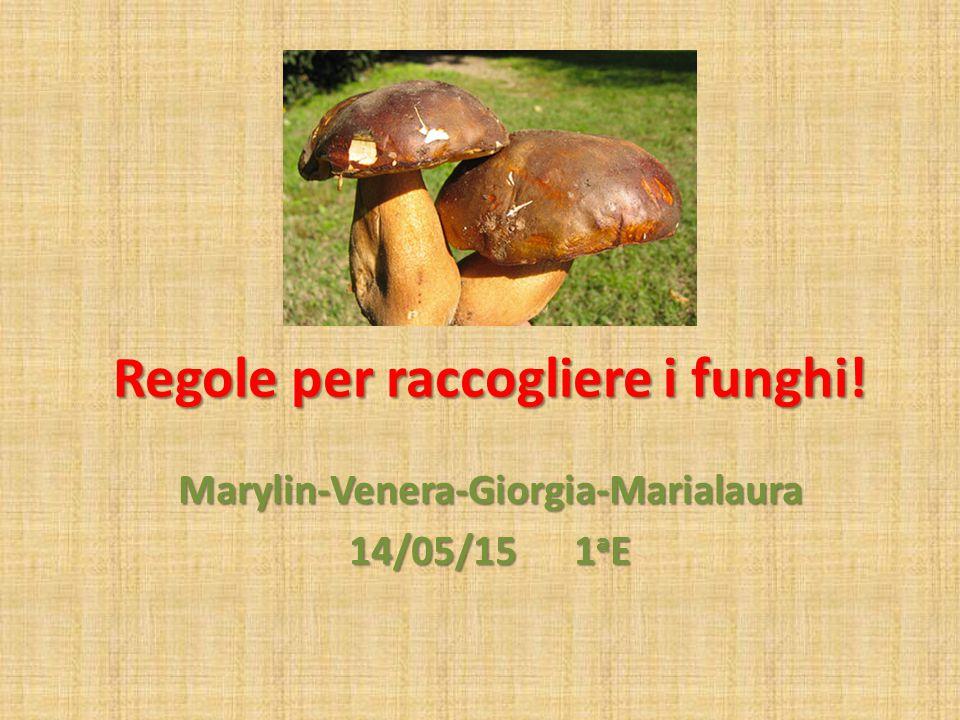 Regole per raccogliere i funghi!