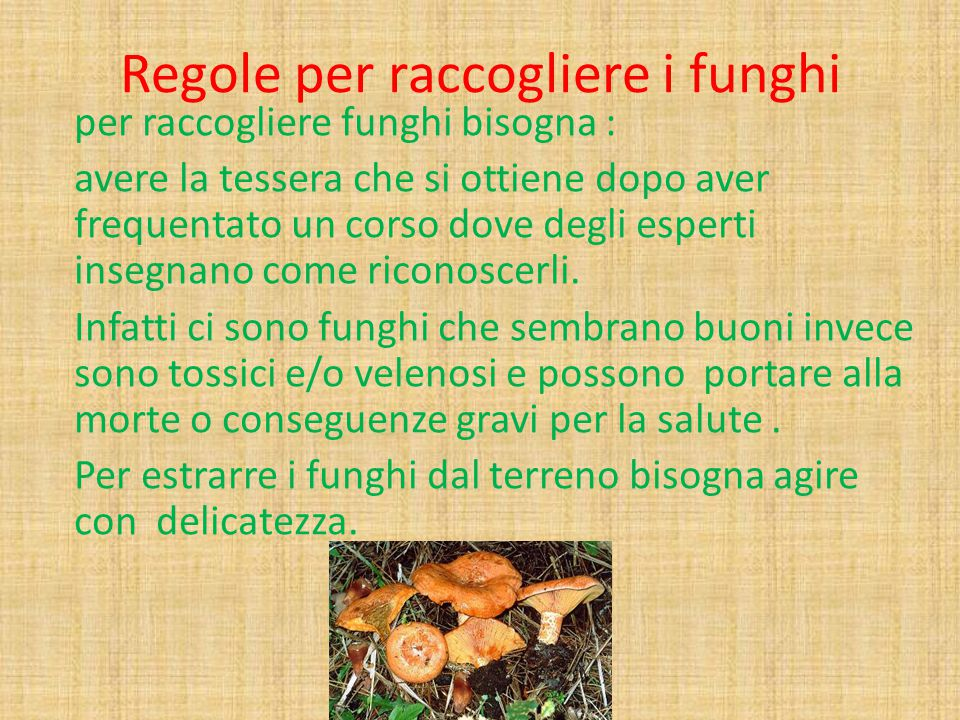 Regole per raccogliere i funghi