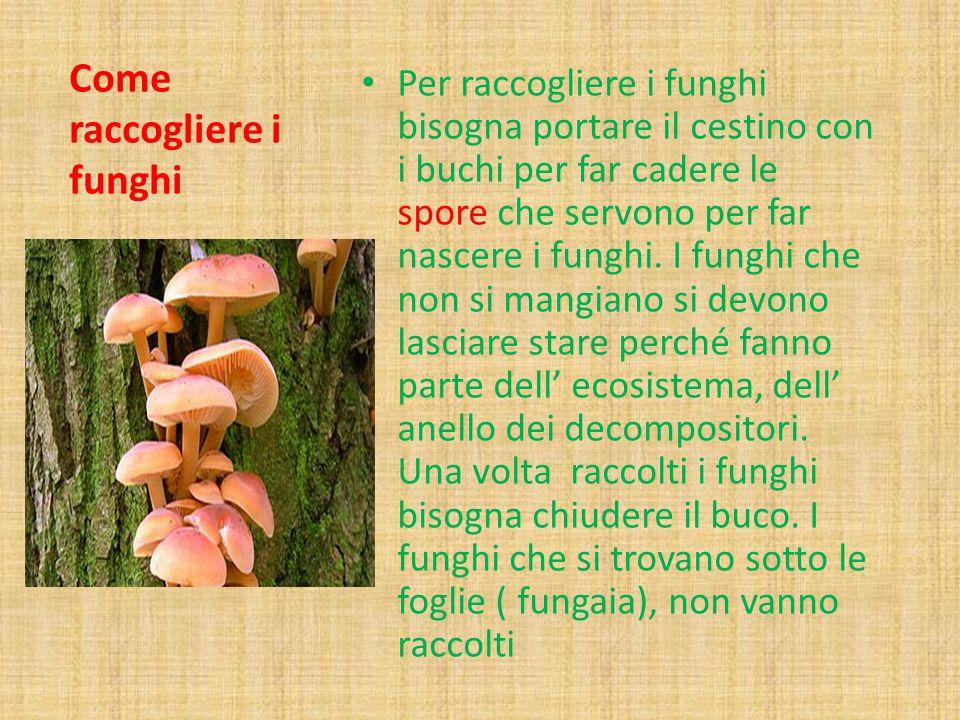 Come raccogliere i funghi