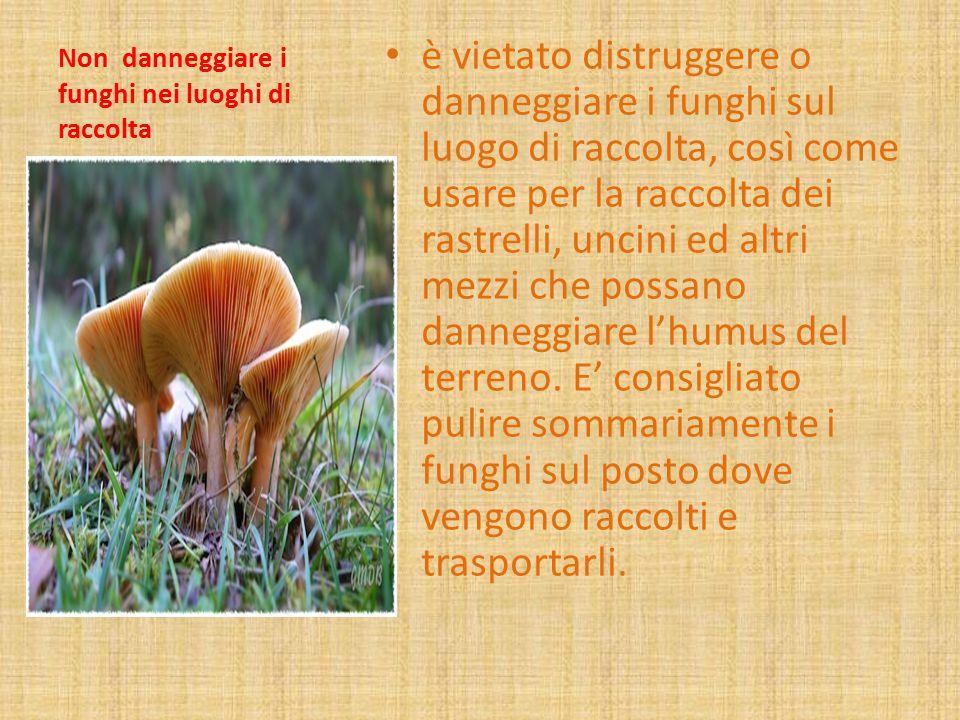 Non danneggiare i funghi nei luoghi di raccolta