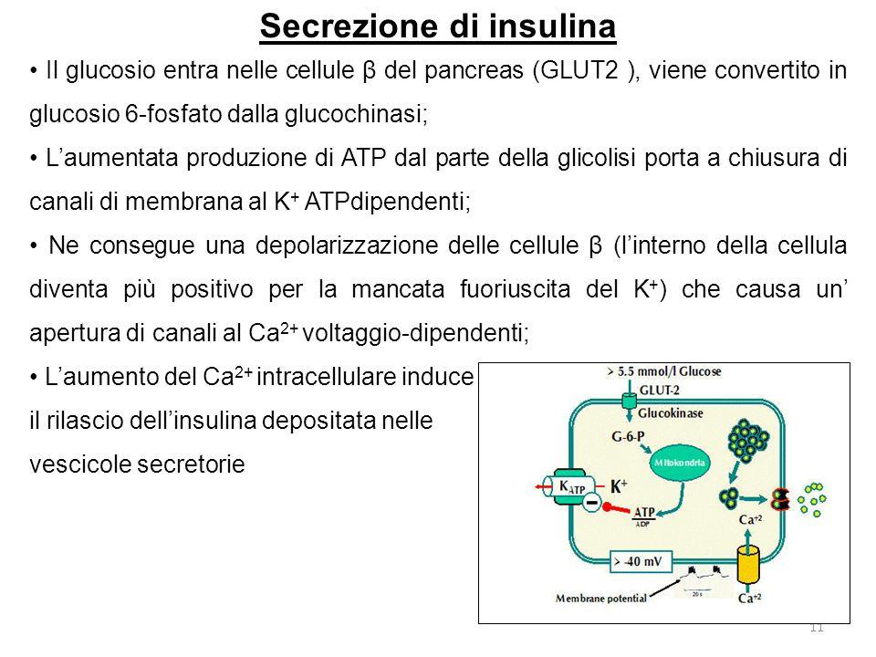Secrezione di insulina