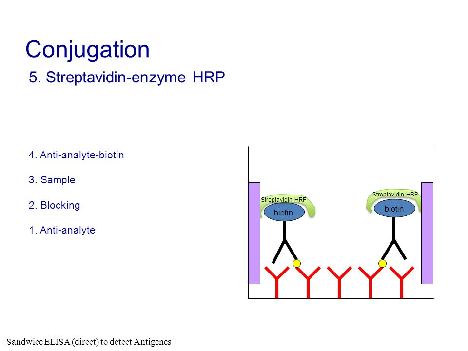 Conjugation 5. Streptavidin-enzyme HRP 4. Anti-analyte-biotin