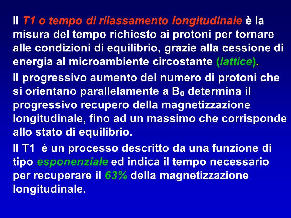 Il T1 o tempo di rilassamento longitudinale è la misura del tempo richiesto ai protoni per tornare alle condizioni di equilibrio, grazie alla cessione di energia al microambiente circostante (lattice).